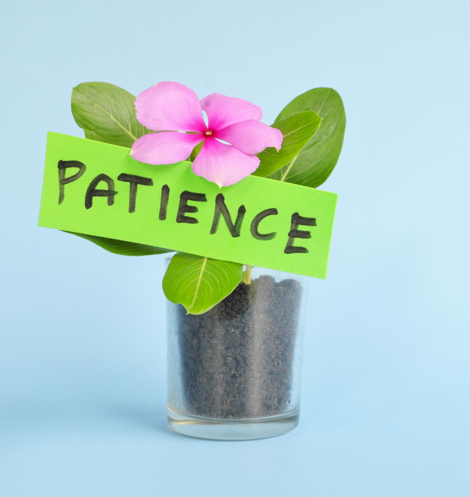 Keto billet N°9 La floraison des patiences